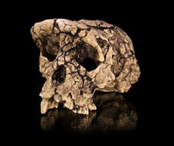Toumai (7 millones de años atrás)