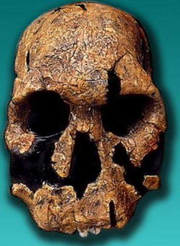 Homo rudolfensis (1,9 millones de años atrás)