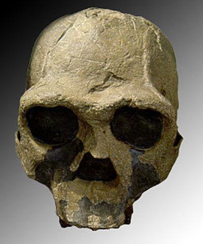 Homo ergaster (1,6 millones de años)