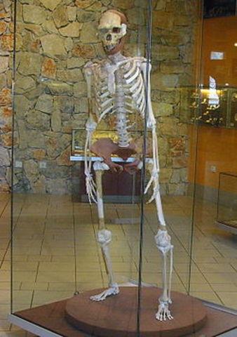 Homo erectus (1 millon de años atrás)