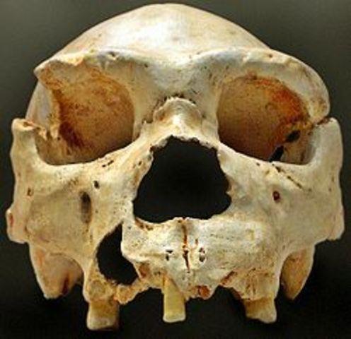 Homo heidelbergensis (500 000 años atrás)