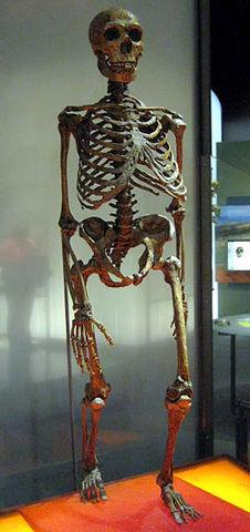 Homo neanderthalensis (300 000 años atrás)