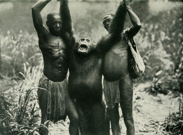 Ape Debate