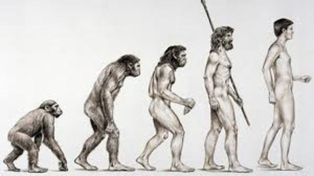 A new view of humans and apes