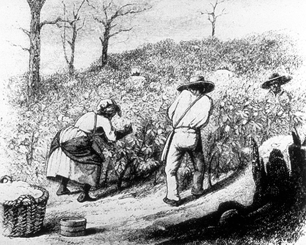 The Invention of The Cotton Gin I