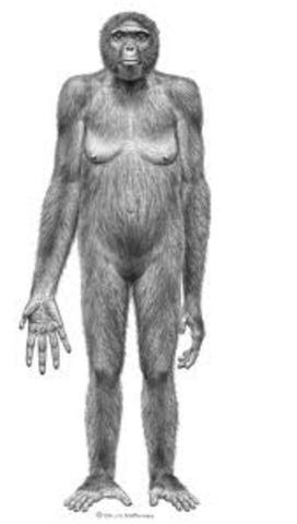 Ardipithecus ramidus PARTE 1
