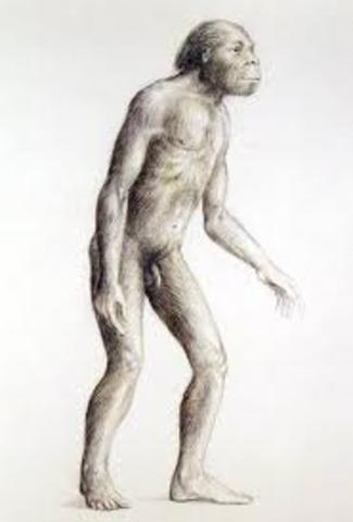 Australopithecus africanus PARTE 2