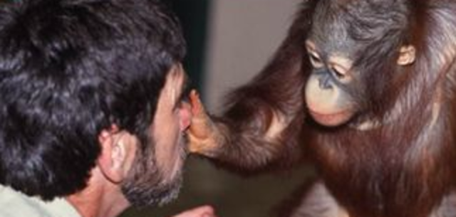 humans and apes