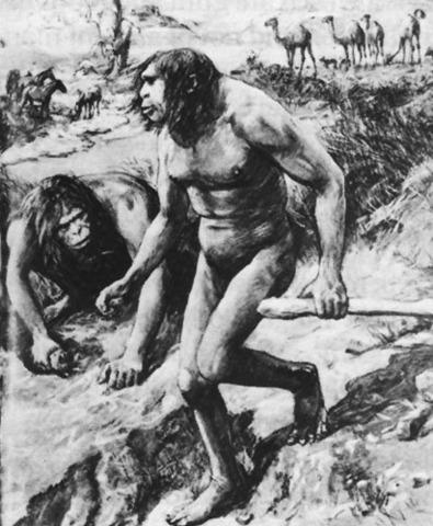 Man-like Ape