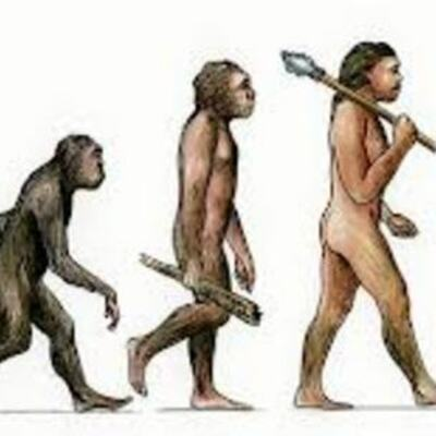 History of Evolution timeline