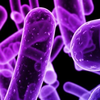 Microbiología timeline