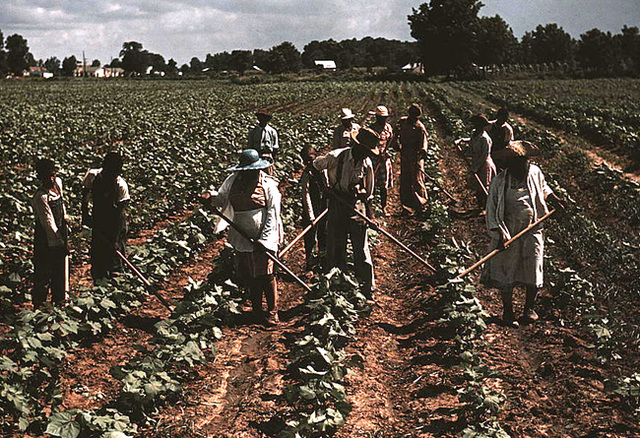 Revolution in Agriculture