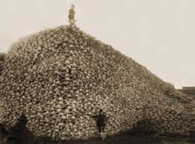 Buffalo Endangerment