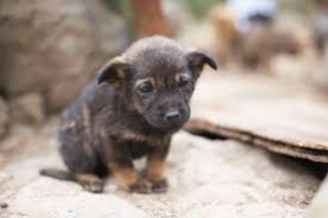 azar blows up lavenders puppy