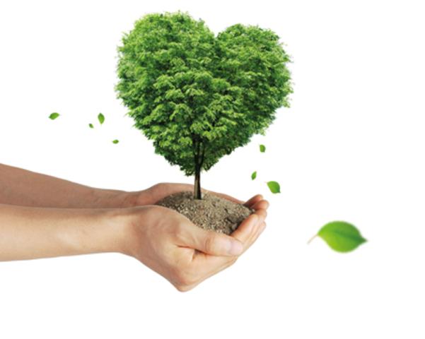 Creación de la primera Dirección de Educación Ambiental dependiente de la Sedue. México