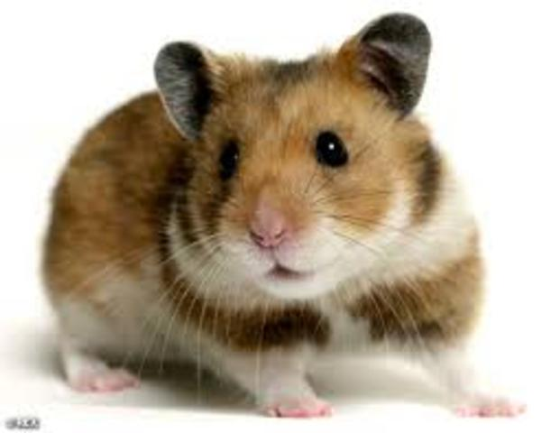 Was found in the woods being raised by hamsters