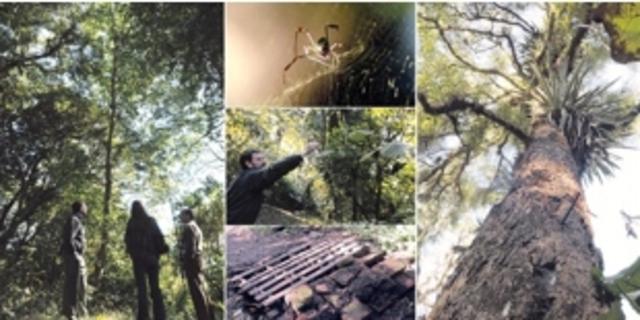 Creación de la primera Dirección de Educación Ambiental dependiente de la Sedue. (Mexico)