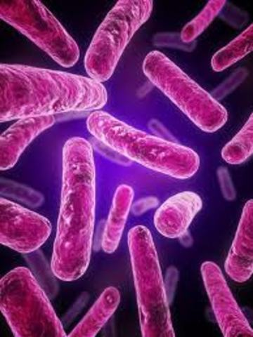 First discribing of bacteria and many other things