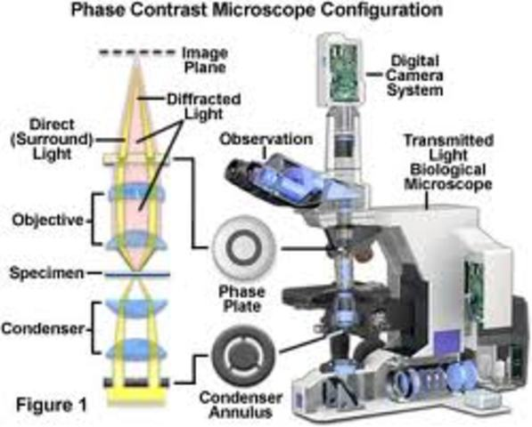 1st Phase-contrast microscope invented