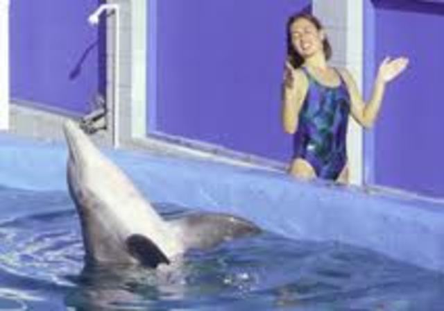 dolphin mimicry