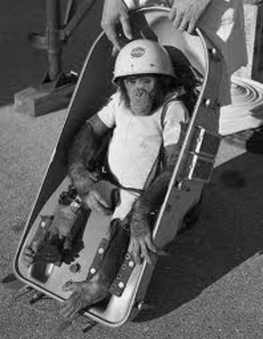 First Chimp in Space