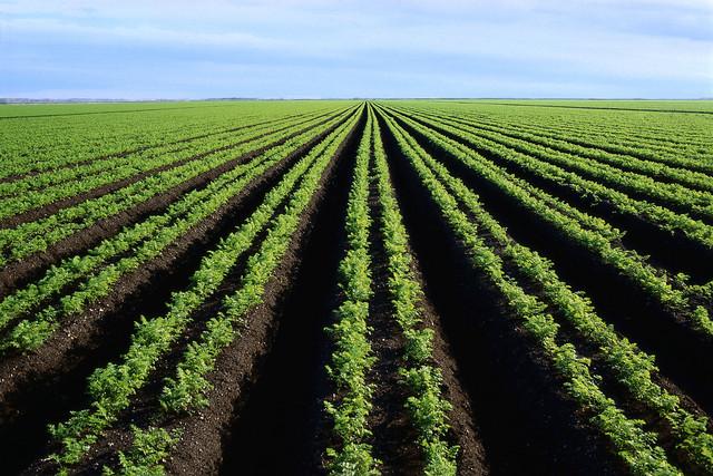 Industrial Farming Developed