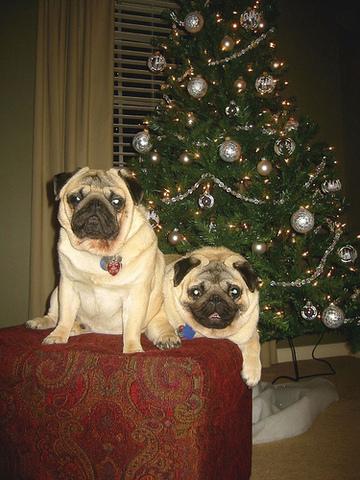 christmas with my bro
