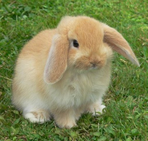 Bunny is now out on it's own lokking for a group it can join.