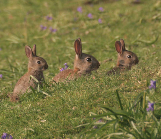 Bunny found a group!