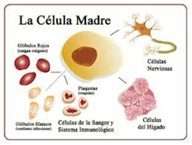 Clonación de células madres