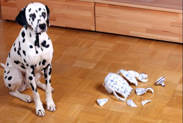 Hundeversicherung vergleichen