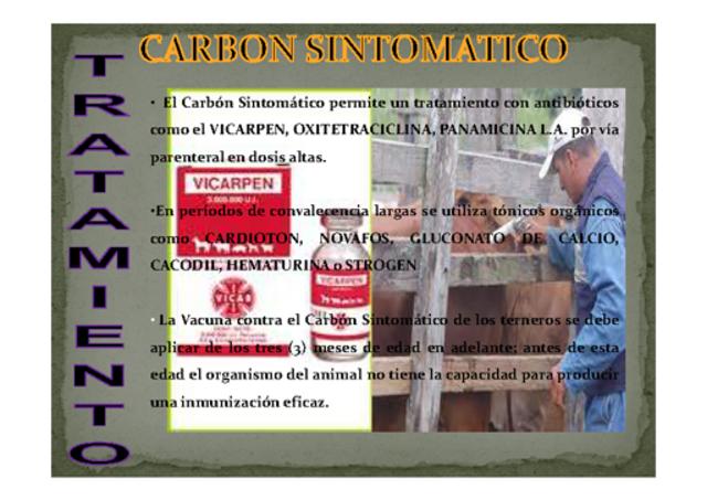 carbon sintomatico0