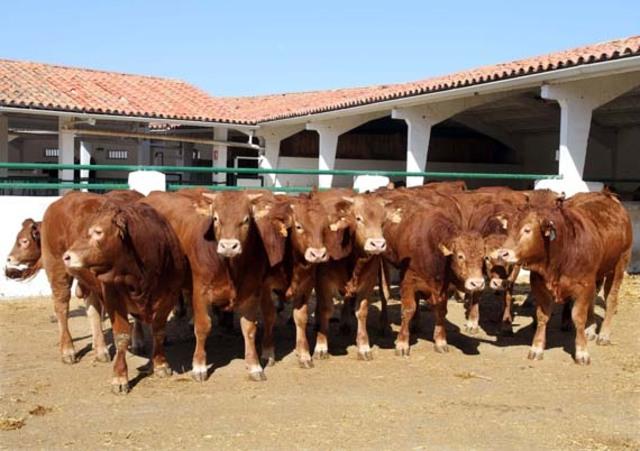 hospitalizacion bovina