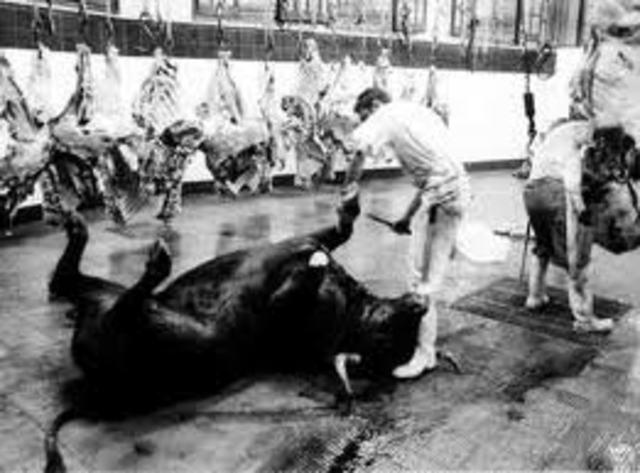 reglas para mataderos
