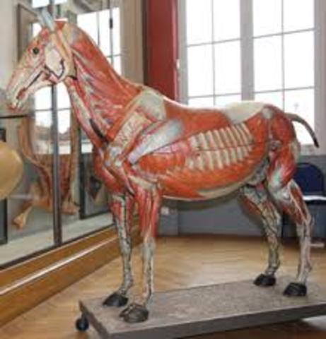 se abre museo veterinario apl publico