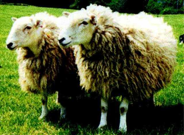 primera clonacion en animales