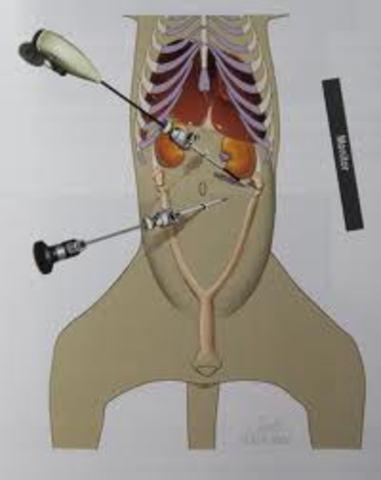 laparoscopia en veterinaria