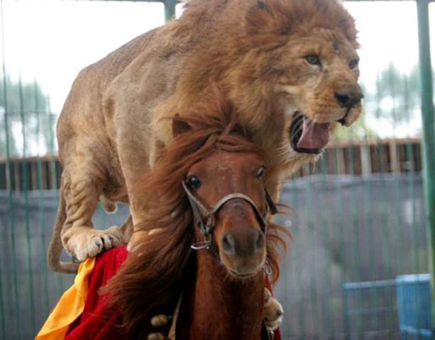 Monte mi primer caballo