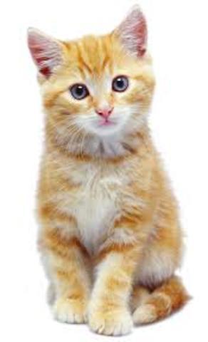 My kitten died