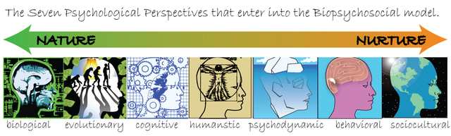 7 Psycological Perspectives