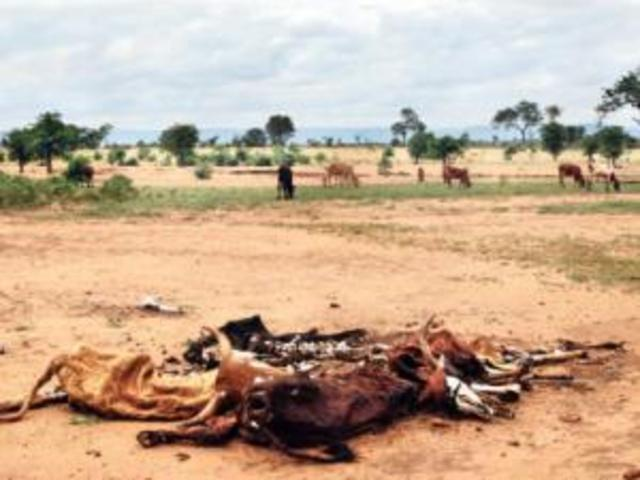 Droughts cripple Limpopo farmers