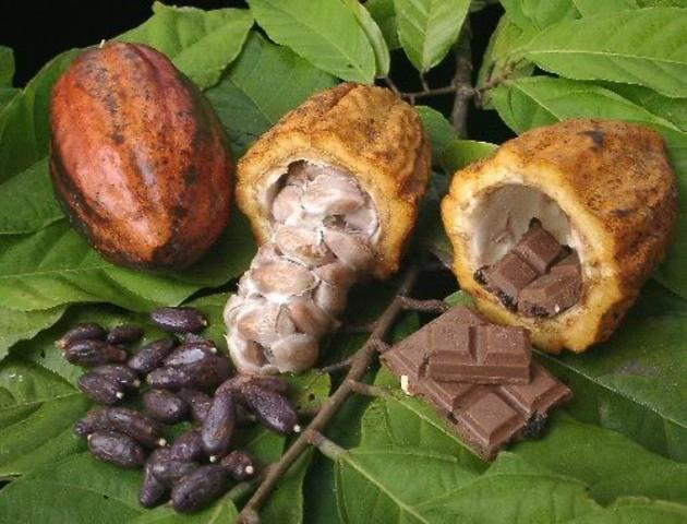 The Mayans made the first Chocolate drink