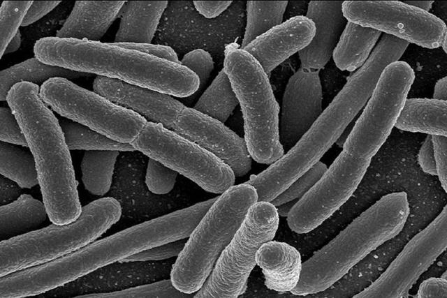 Antoni Van Leeuwenhoek confirmed bacterial life