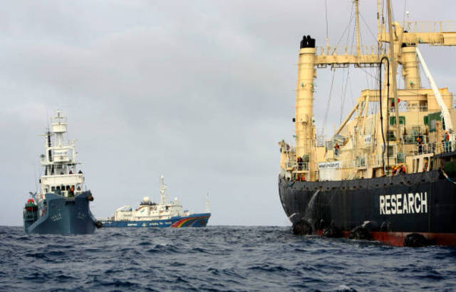 El Nisshin Maru embiste al Arctic Sunrise