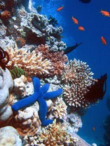 publicacion estudio de los arrecifes