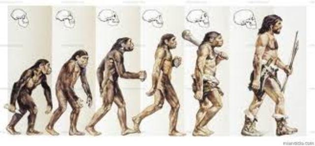 Teoría de la Evoulución