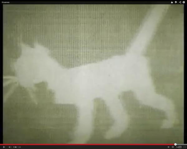 модель движения кошки