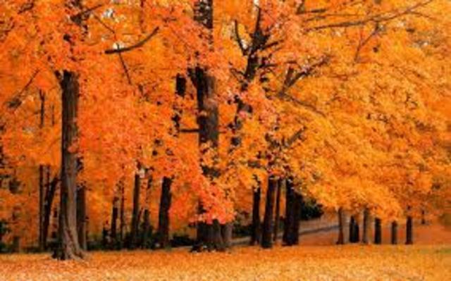Autumn Is Arriving