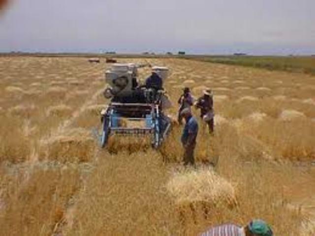 Producto Agrícola