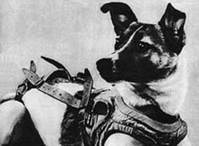 The first animal in space [didn't survive]